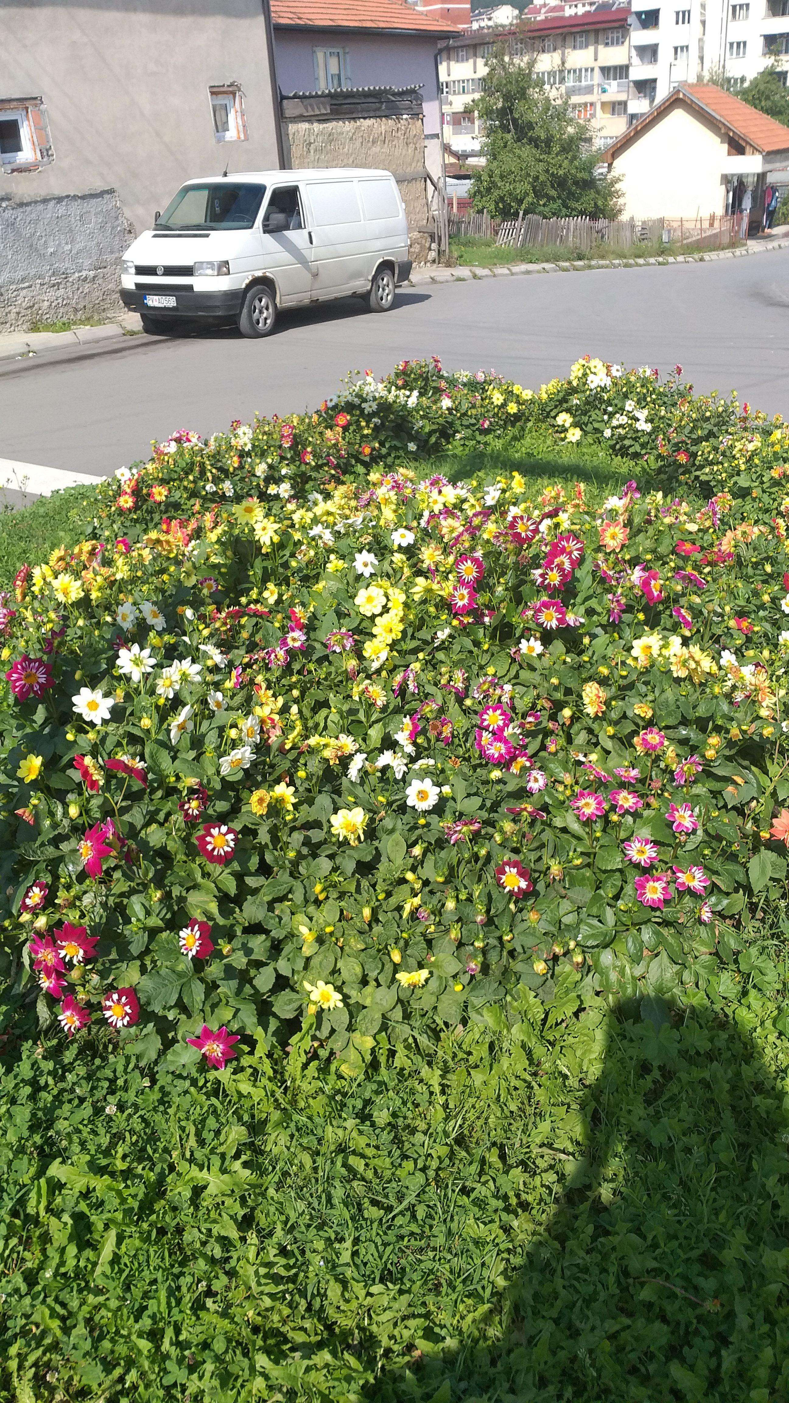 cvijeće u gradu