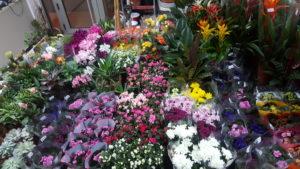 kućno cvijeće