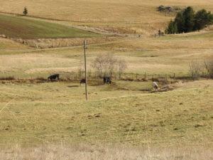 neiskorišćeno zemljište bivših zemljoradničkih zadruga