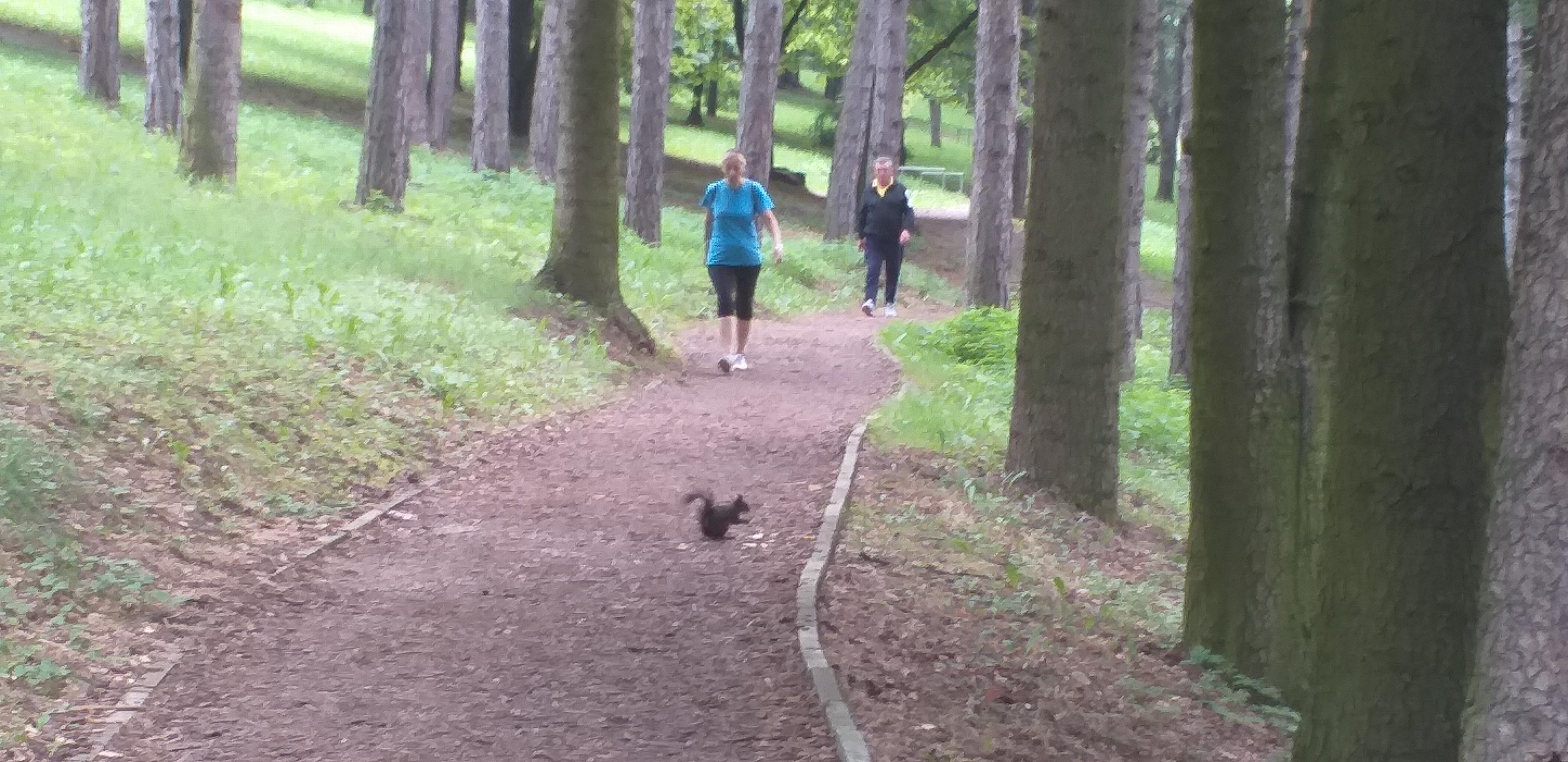 vjeverica na trim stazi