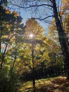 jesenje sunce