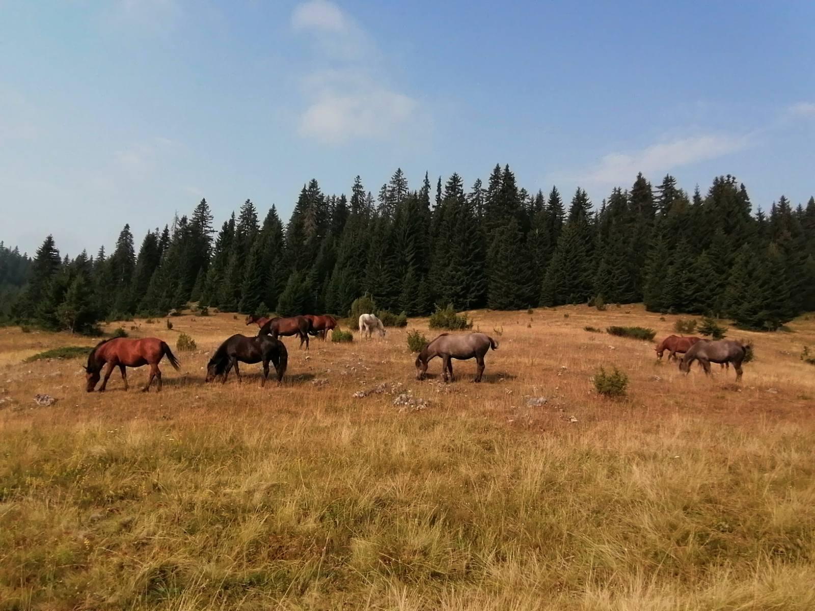 Konjsko polje