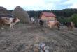 selo Krce 1